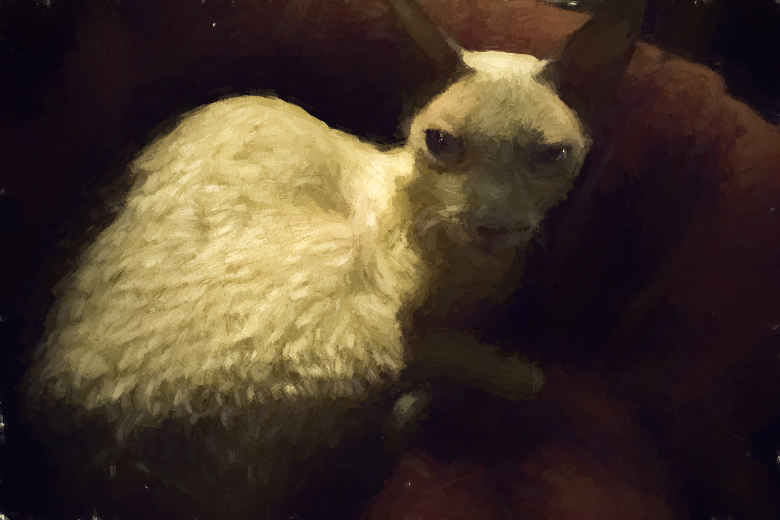Ponzie, a Cornish Rex, done Rembrandt style