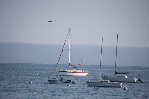 Two rows of boats at Capitola, photograph by M. LaFreniere, all rights reserved, Cactus Catz