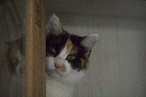 Pinkie peeking, Cactus Catz