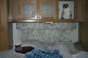 Pinkie watching Midnight, Cactus Catz