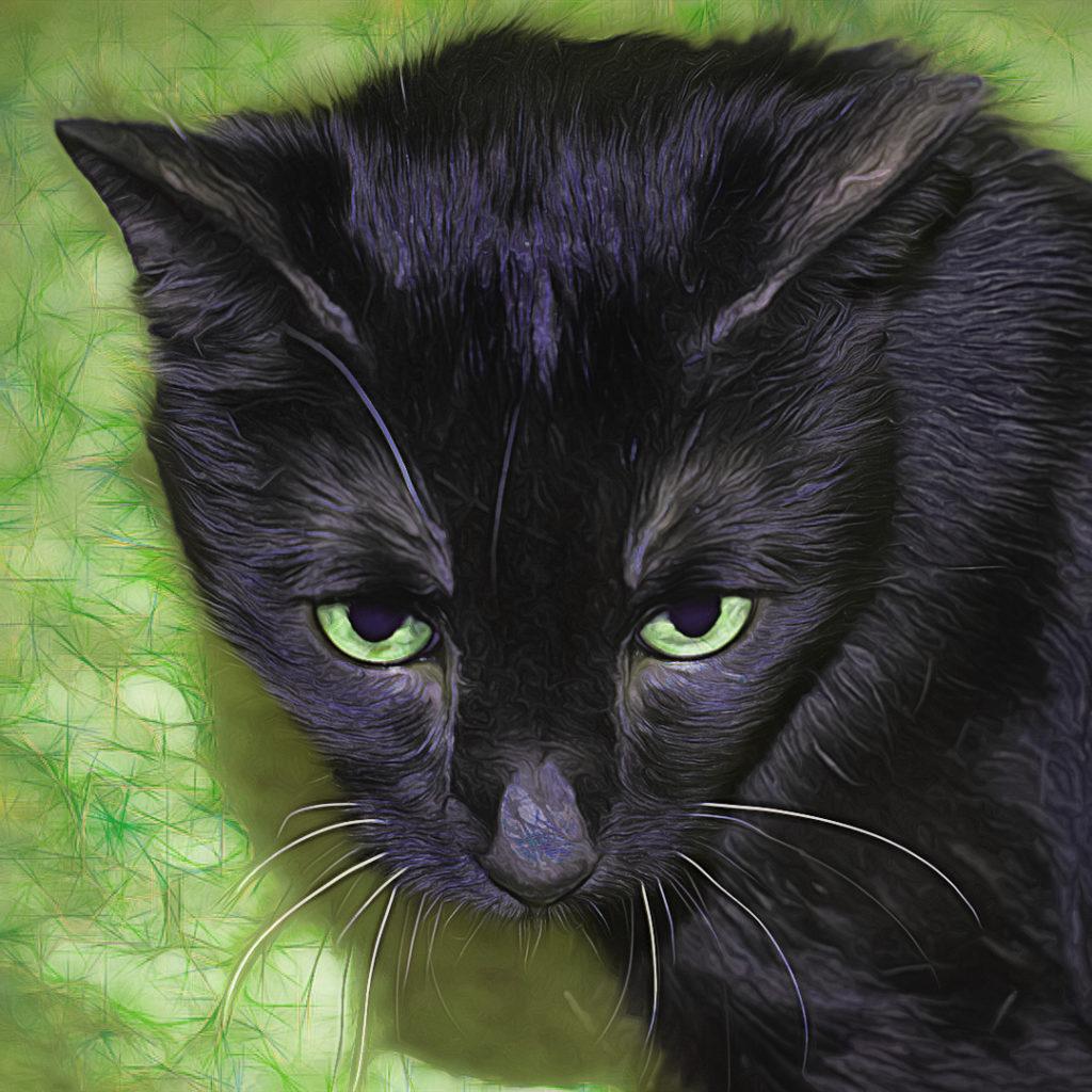 Midnight, my black cat, dreams of the Emerald Isle