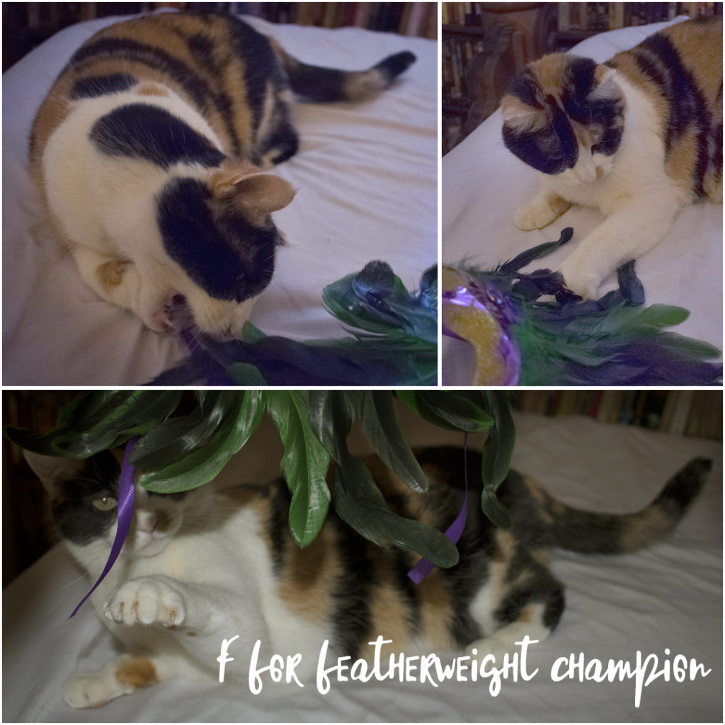 3 photos of Pinkie, my calico cat, playing with feathers, photo by M. LaFreniere, all rights reserved.