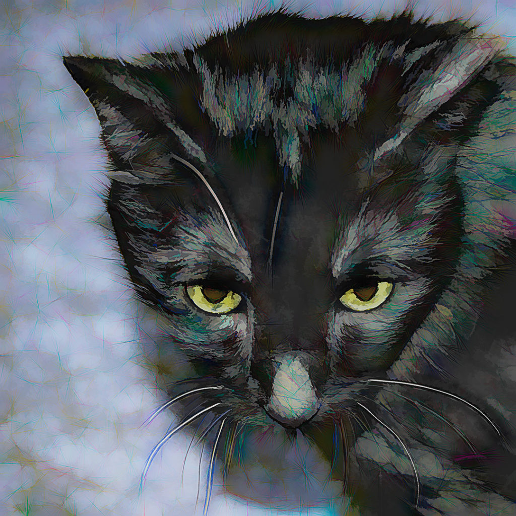 my black cat Midnight, digitally manipulated photograph, cat art, by M. LaFreniere, CactusCatz