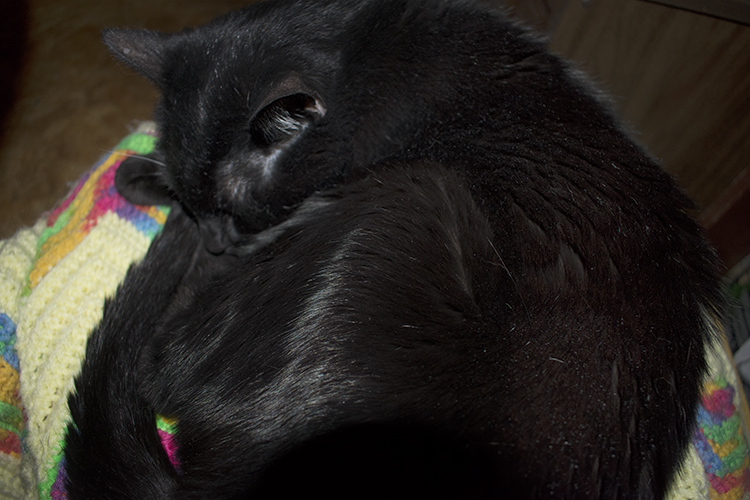 My black cat asleep curled in a circle, photograph by M. LaFreniere, CactusCatz